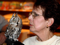 Julie Collier with her Eastern Screech-Owl